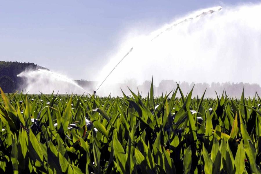 Raisonner l'irrigation de son maïs