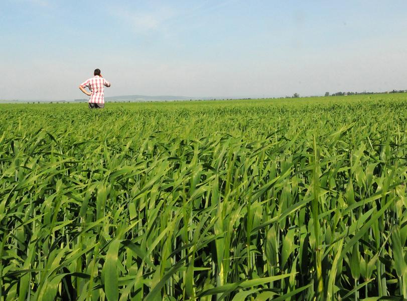 Comment lutter contre les maladies des céréales ?