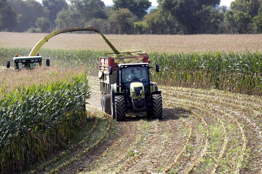Date récolte maïs : découvrez comment cibler la période idéale !