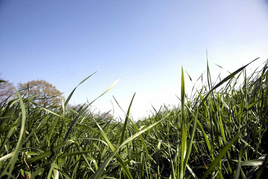 Diversifier ses prairies pour une production toute l'année