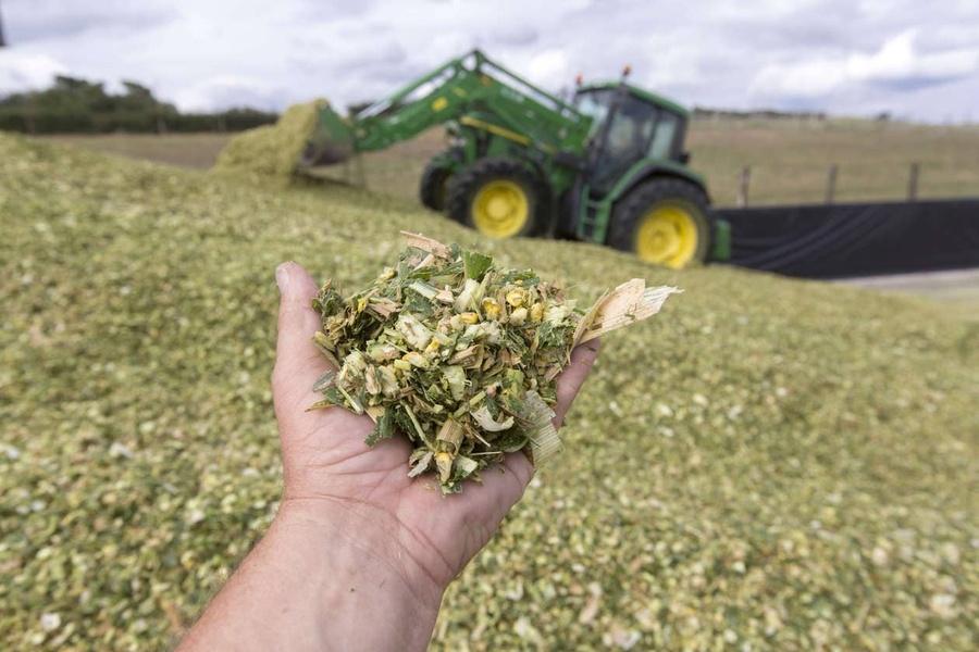 Découvrez notre bulletin cru maïs fourrage 2019