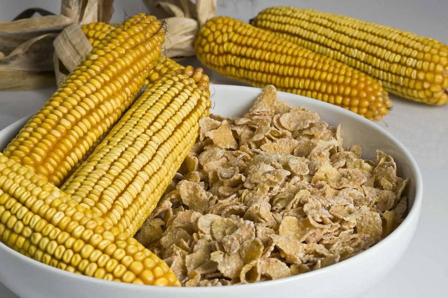 Valoriser le maïs, une matière première présente partout dans notre quotidien