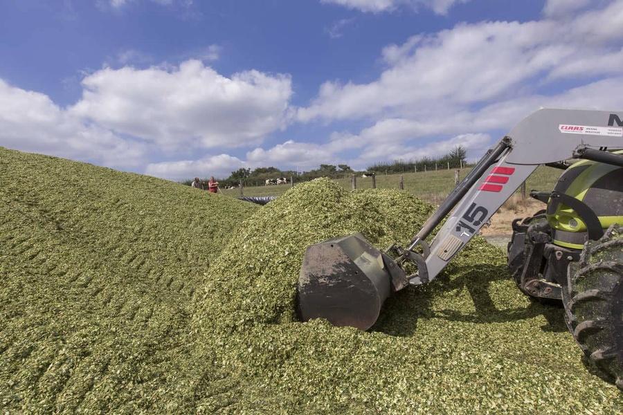 Bulletin cru maïs 2020 : valeurs alimentaires des maïs ensilage