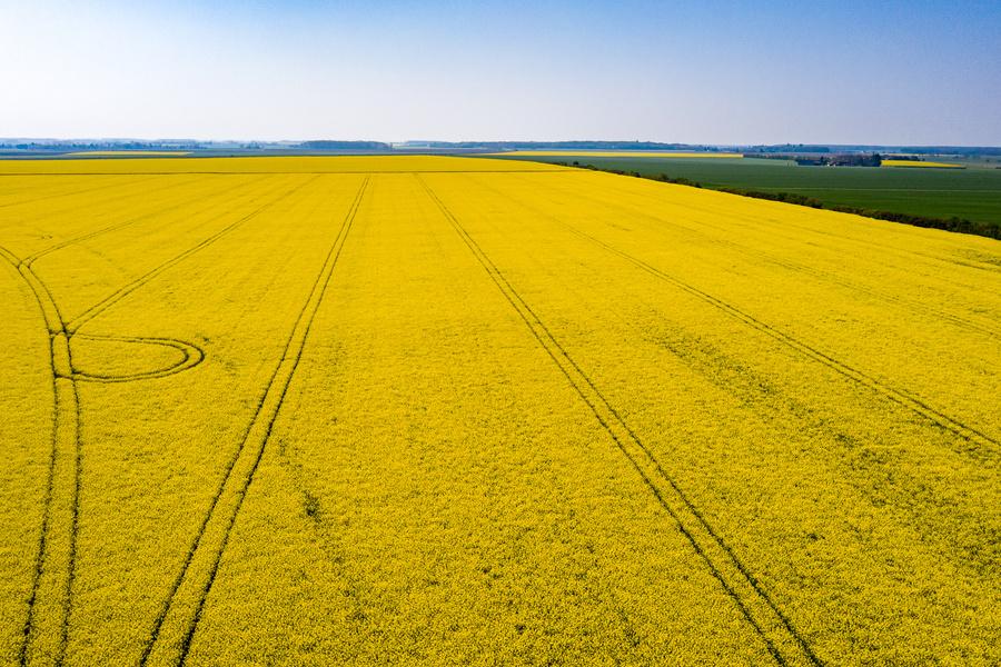 Comment prolonger le bon semis en bonne installation automnale ?
