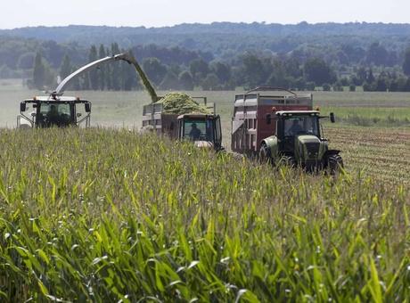 Récolte maïs fourrage : définir le bon stade pour se lancer !