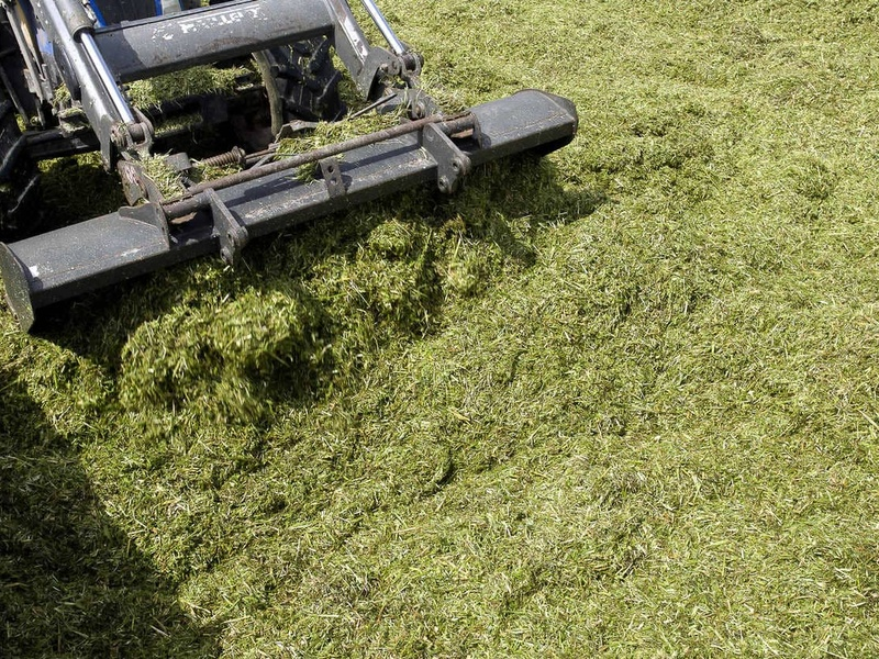 Réussir la conservation de son herbe
