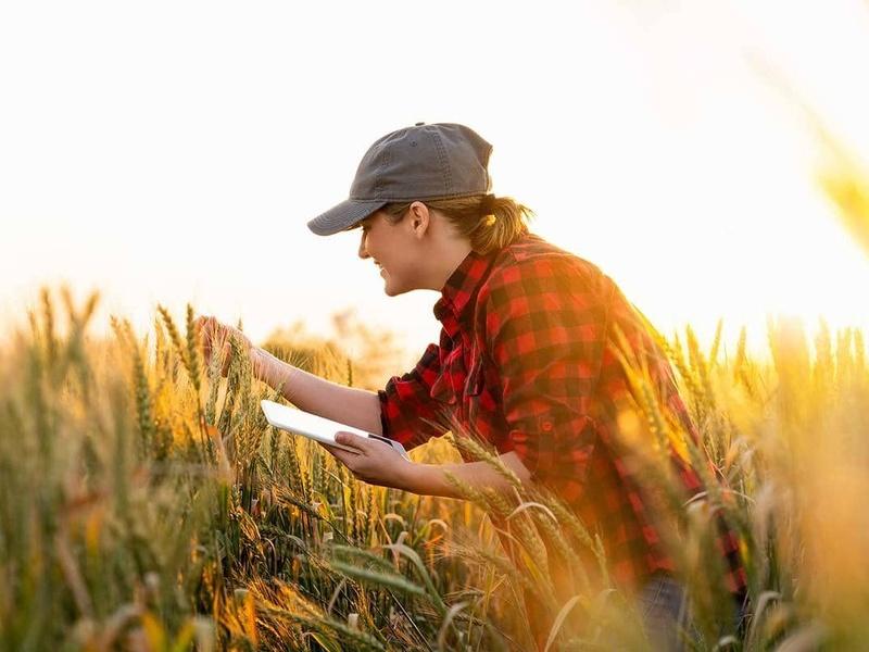 Culture des céréales : comment les réussir ?