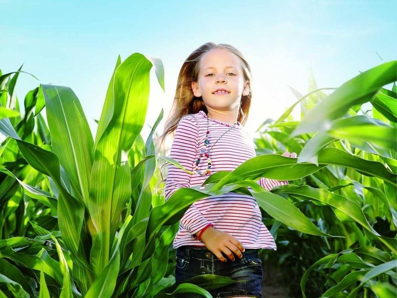 « Avec les maïs HDi®, j'ai constaté une hausse de la matière sèche ingérée et une progression de la production laitière »