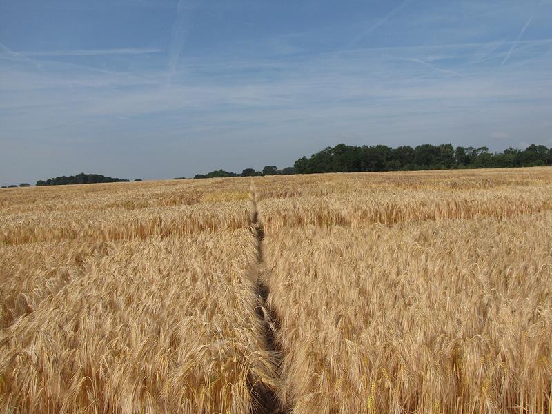 Combien de CEPP avec les variétés blé et orge ?