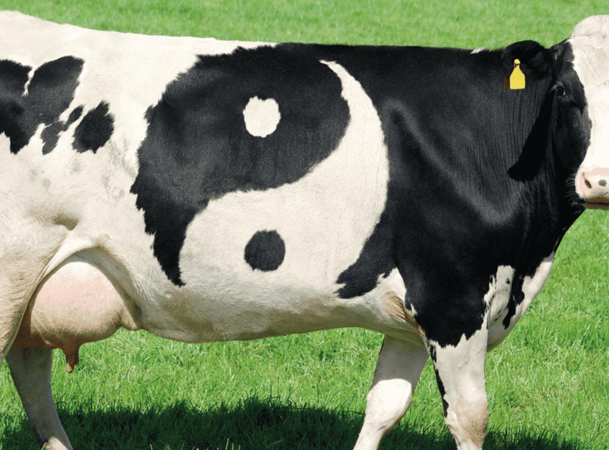 L'histoire de Ration Gagnante, solution pour les éleveurs bovins