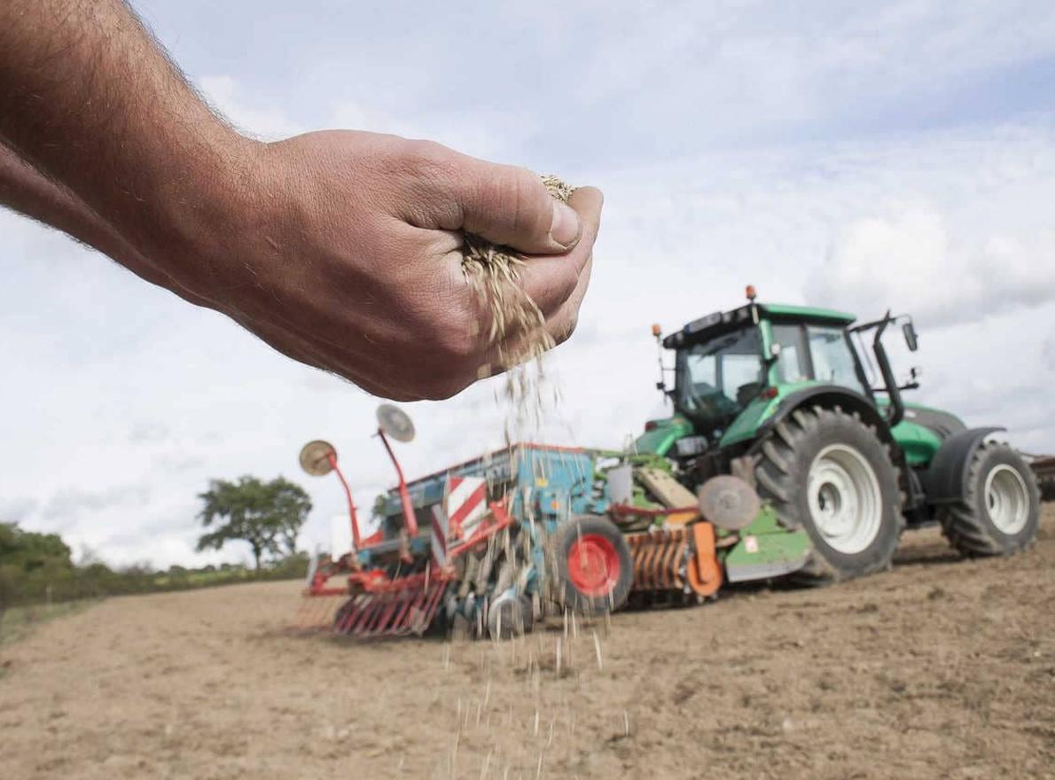 Quelle est la date optimale de semis en fourragères ?