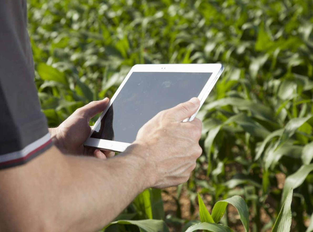 Piloter son irrigation maïs grain avec l'OAD LG Vision Irrigation