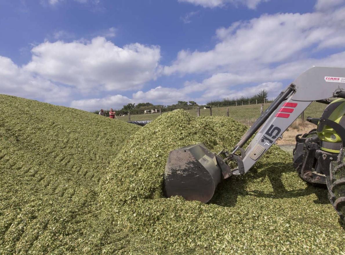 Couvrir un silo de maïs, étapes à connaître pour un bon ensilage