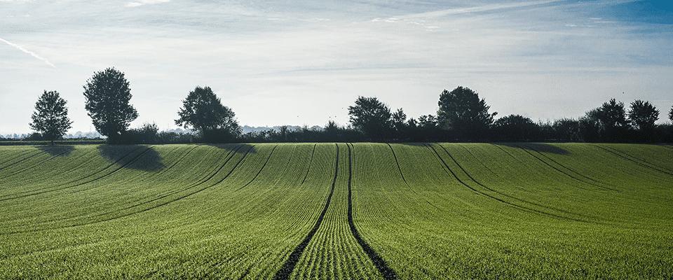 Chlortoluron sur blé, vérifier la tolérance de la variété