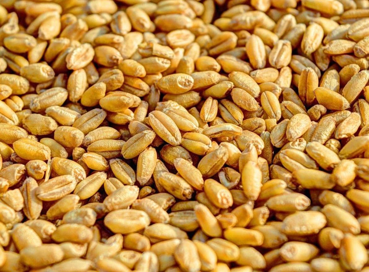 Quels sont les critères de qualité pour commercialiser les blés ?