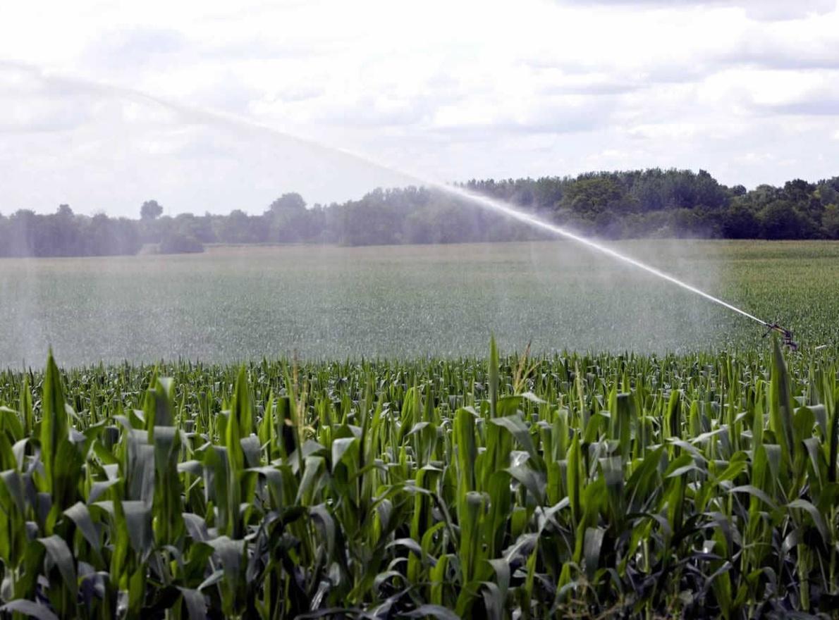 Comprendre les rapports entre le maïs et l'eau