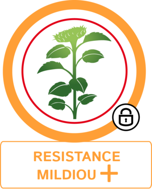 Résistance mildiou +