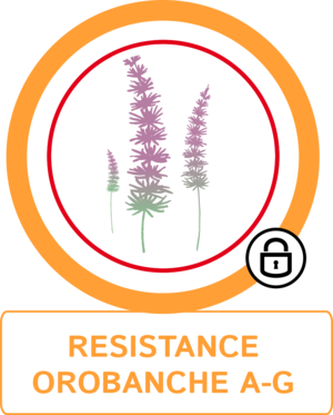 Résistance orobanche A-G