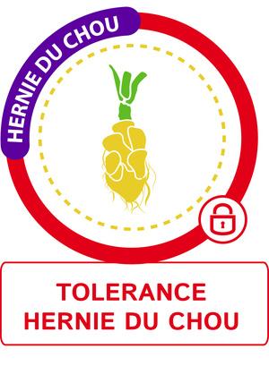 Tolérance hernie du chou