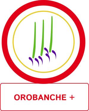 Orobanche +