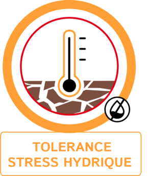 Tolérance stress hydrique