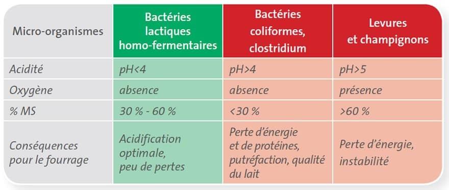 Les micro-organismes dans le fourrage