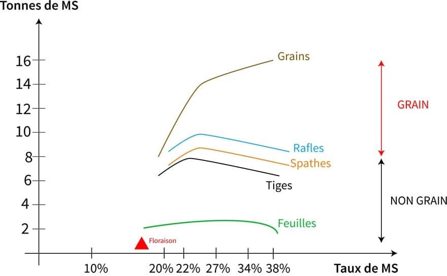 Récolte maïs fourrage