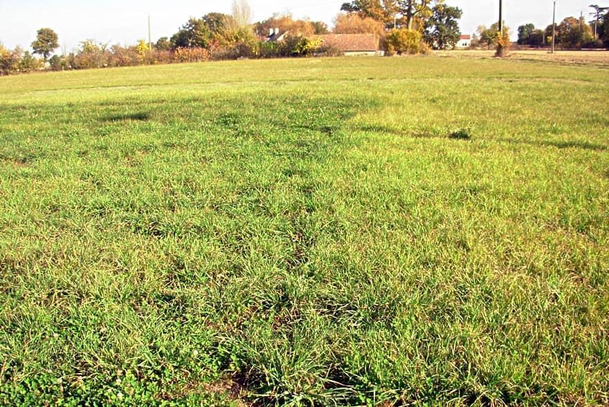 Fertilisation prairie