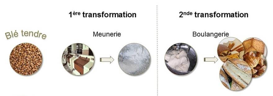 Ble_tendre_transformation