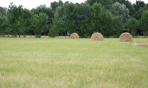 Prairie fourragères sécheresse