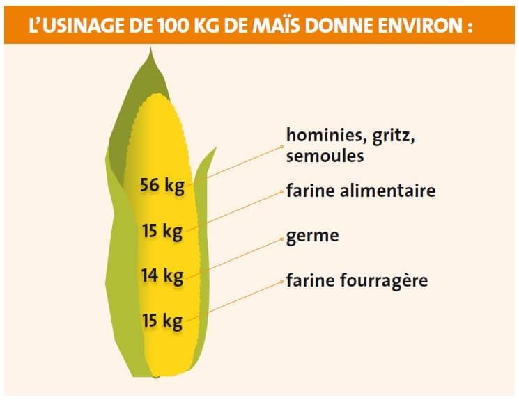 Maïs grain