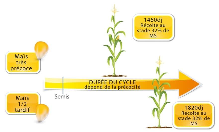 Cycle maïs fourrage