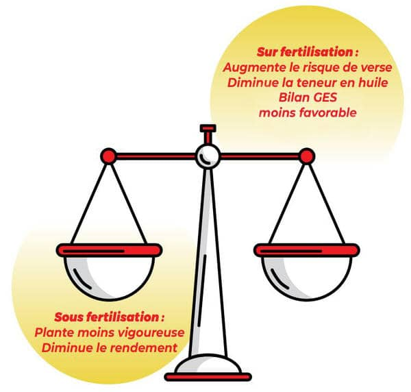 LG - Illustration balance fertilisation azotée Colza